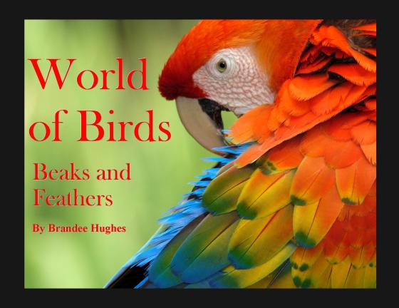 World of Birds - Cover red