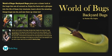 World of Bugs - cover copyjpg