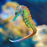 Top 10 most beautiful Seahorse Picts