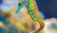 Top 10 most beautiful SeahorsePicts