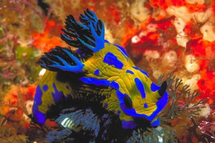Beautiful Sea Slugs Beautiful Sea Slugs