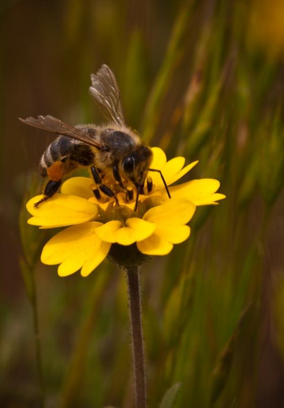 Bee 4-
