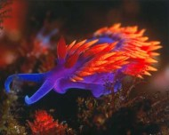 Brighten Your Day With Some Unexpected Beauty… Beautiful Sea Slugs