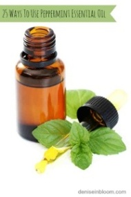 Peppermint Oil Insect solutions – Get rid of Aphids, Repel Spiders, Sooth bites