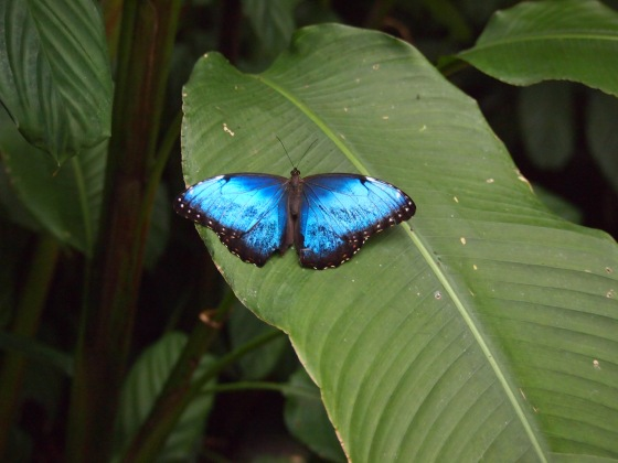 Taken in Costa Rica by Brandee Mae bulabug.com
