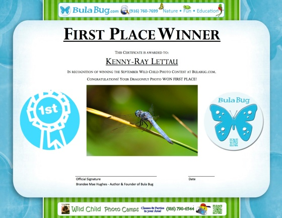 Photo Contest Certificate - September 2013